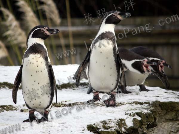 best-penguin